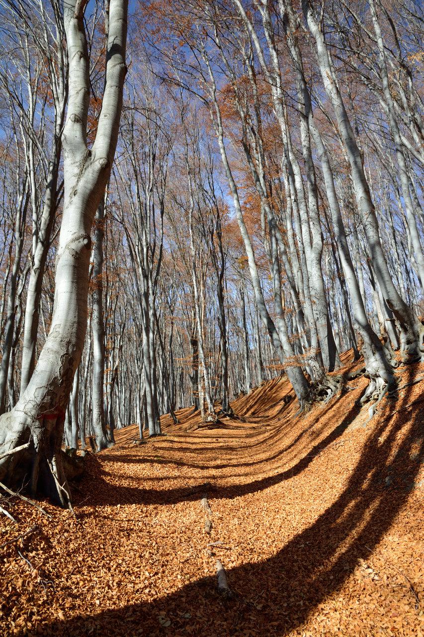 Photo in Landscape | Author Пламен Петков - pv.petkov | PHOTO FORUM