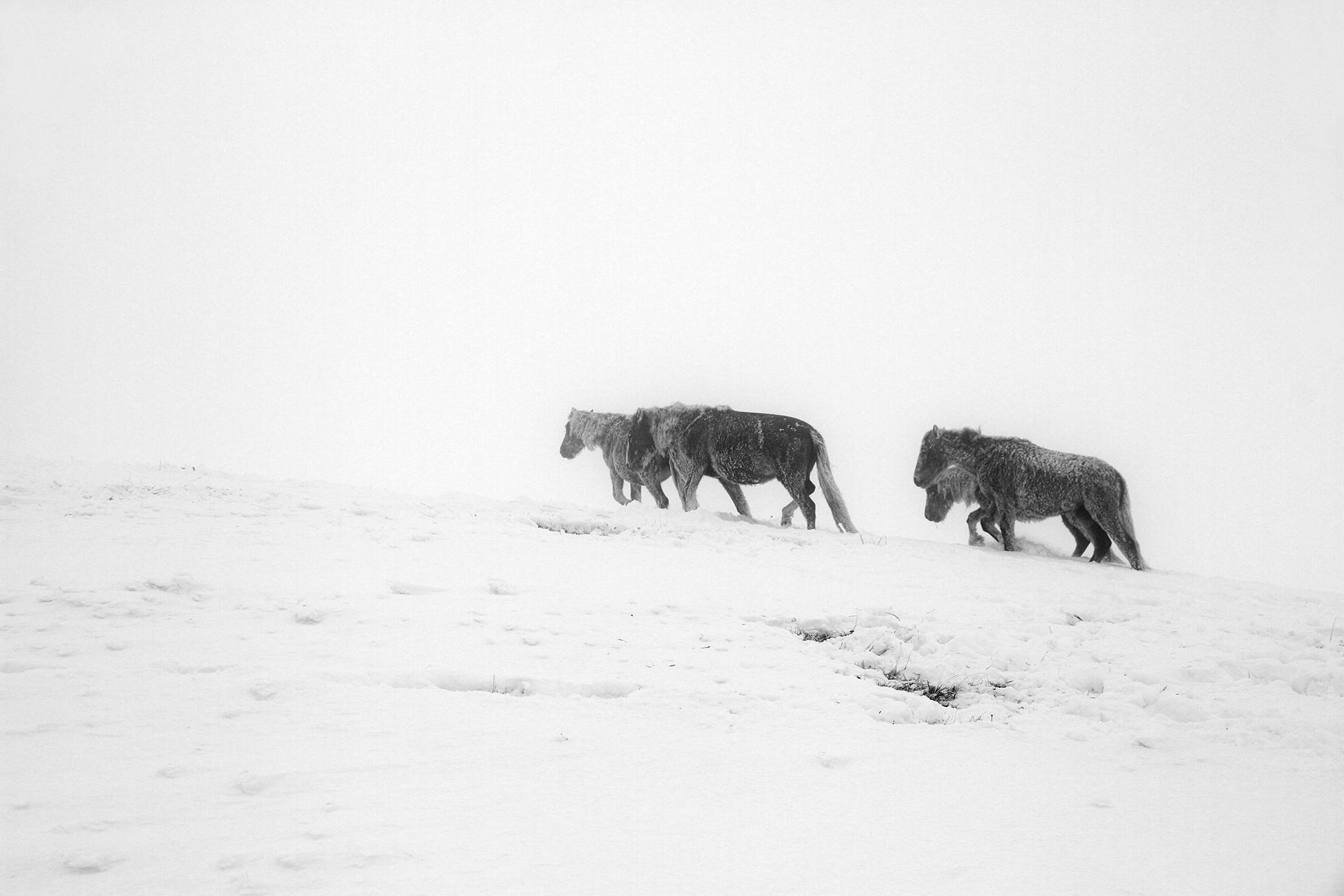 ,,Живот на ръба'' | Author Emiliyan  Evdokimov - evdokimov_emo | PHOTO FORUM