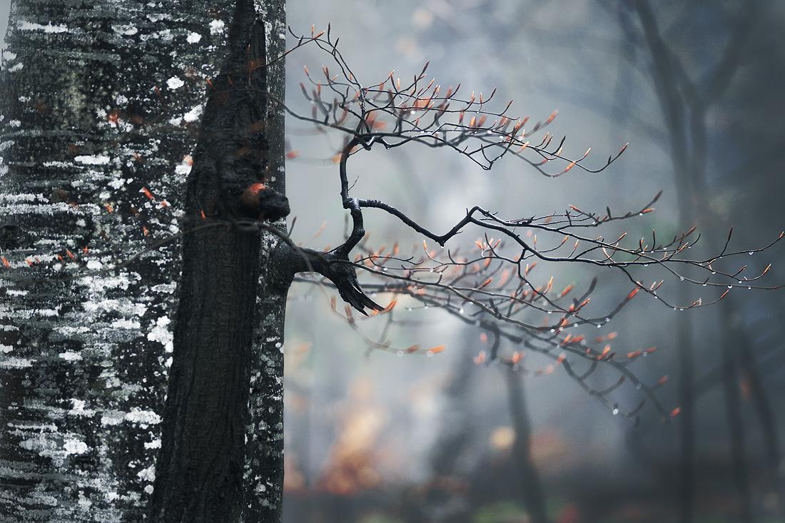 Photo in Nature | Author Богдан Стойко - stb | PHOTO FORUM