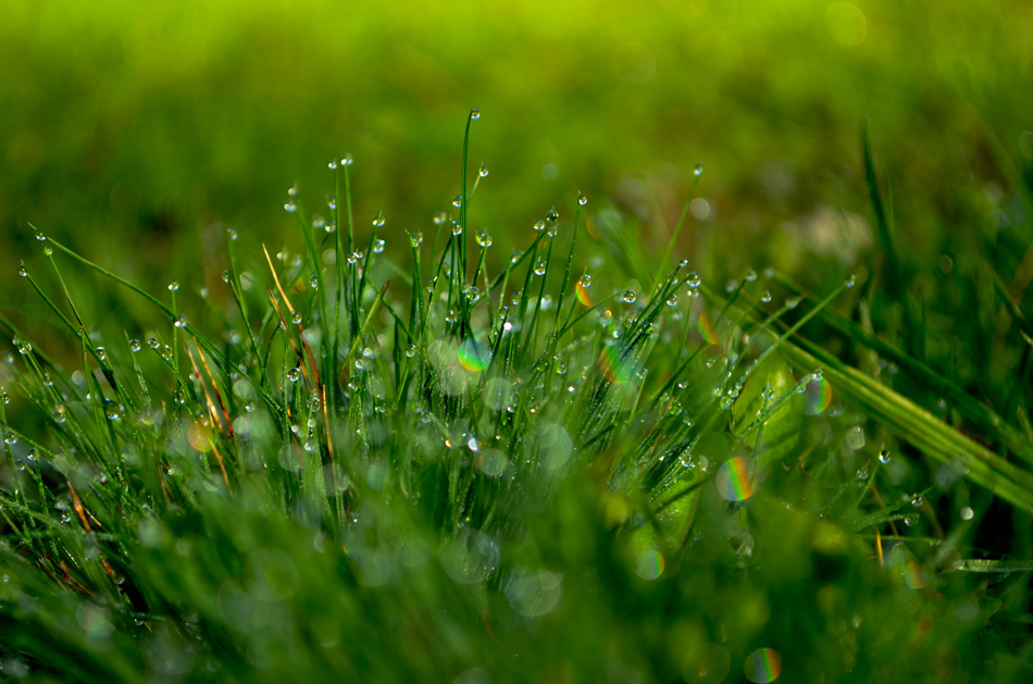 Трева окъпана от утринната роса.   Author liliya konaklieva - liko   PHOTO FORUM