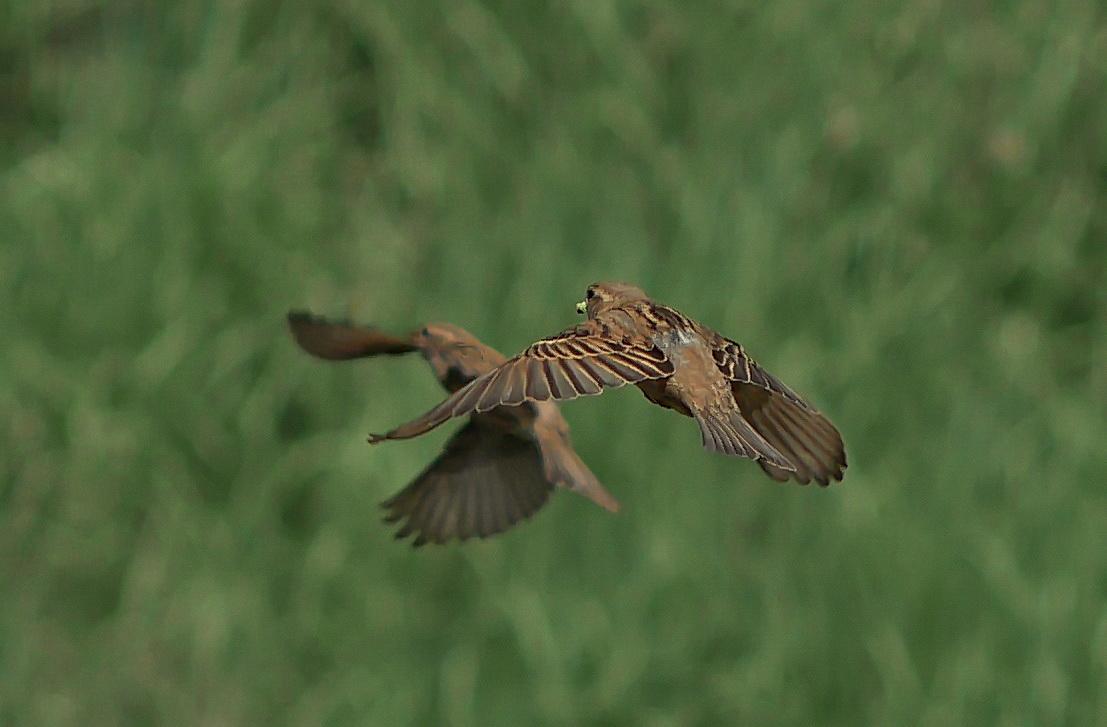 Photo in Wild life | Author joroblg | PHOTO FORUM
