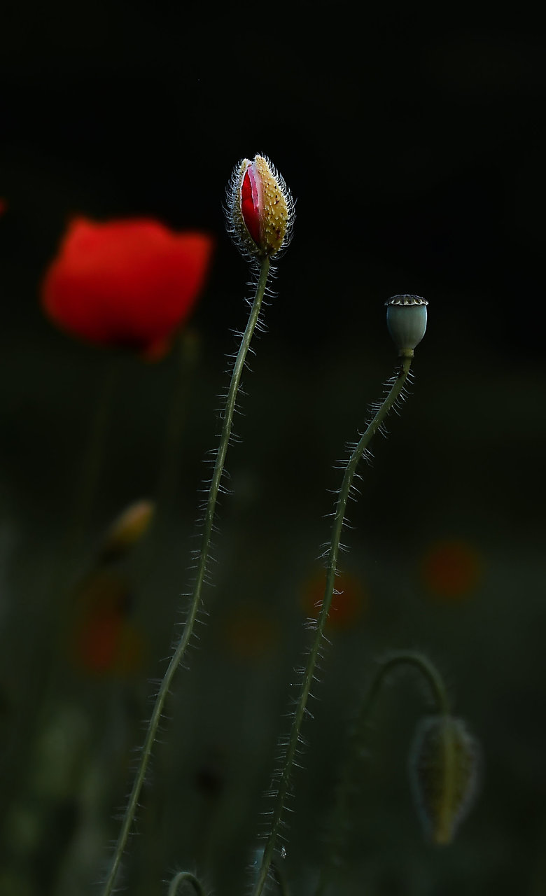Photo in Nature | Author ivan barov - kolmik | PHOTO FORUM