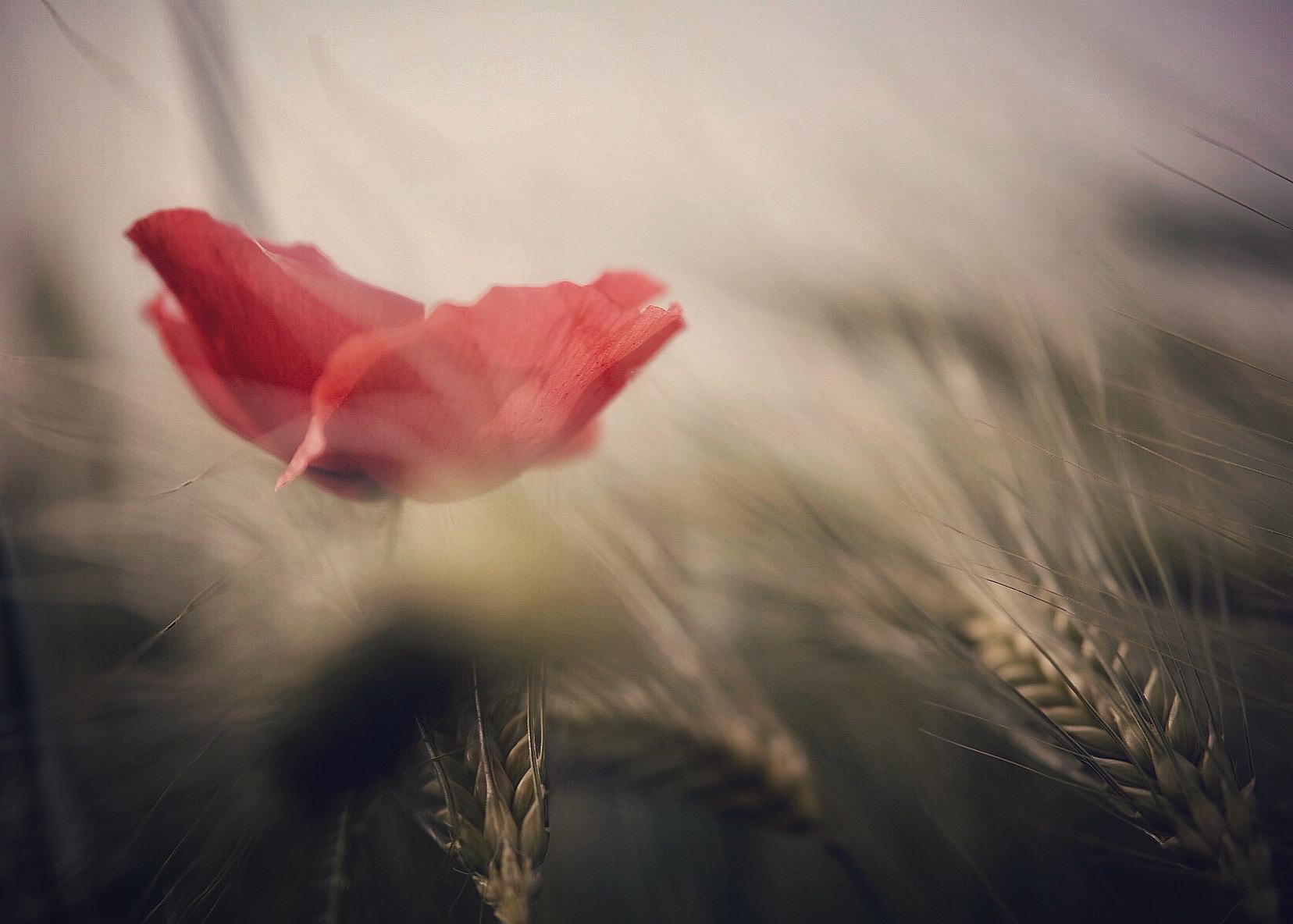 Повей,повей | Author sevenseconds | PHOTO FORUM