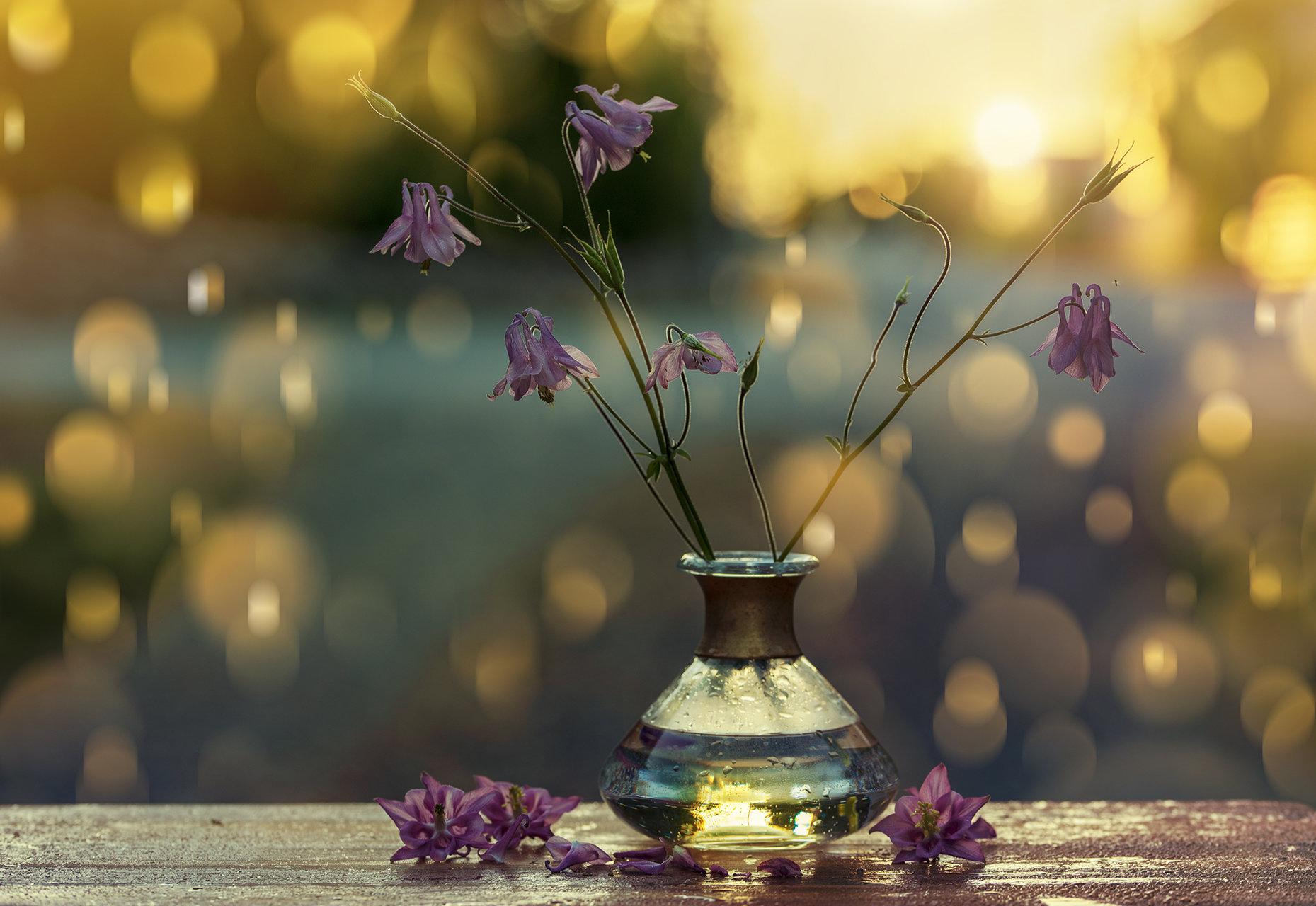Flowers and Sunset   Author vega_nik   PHOTO FORUM