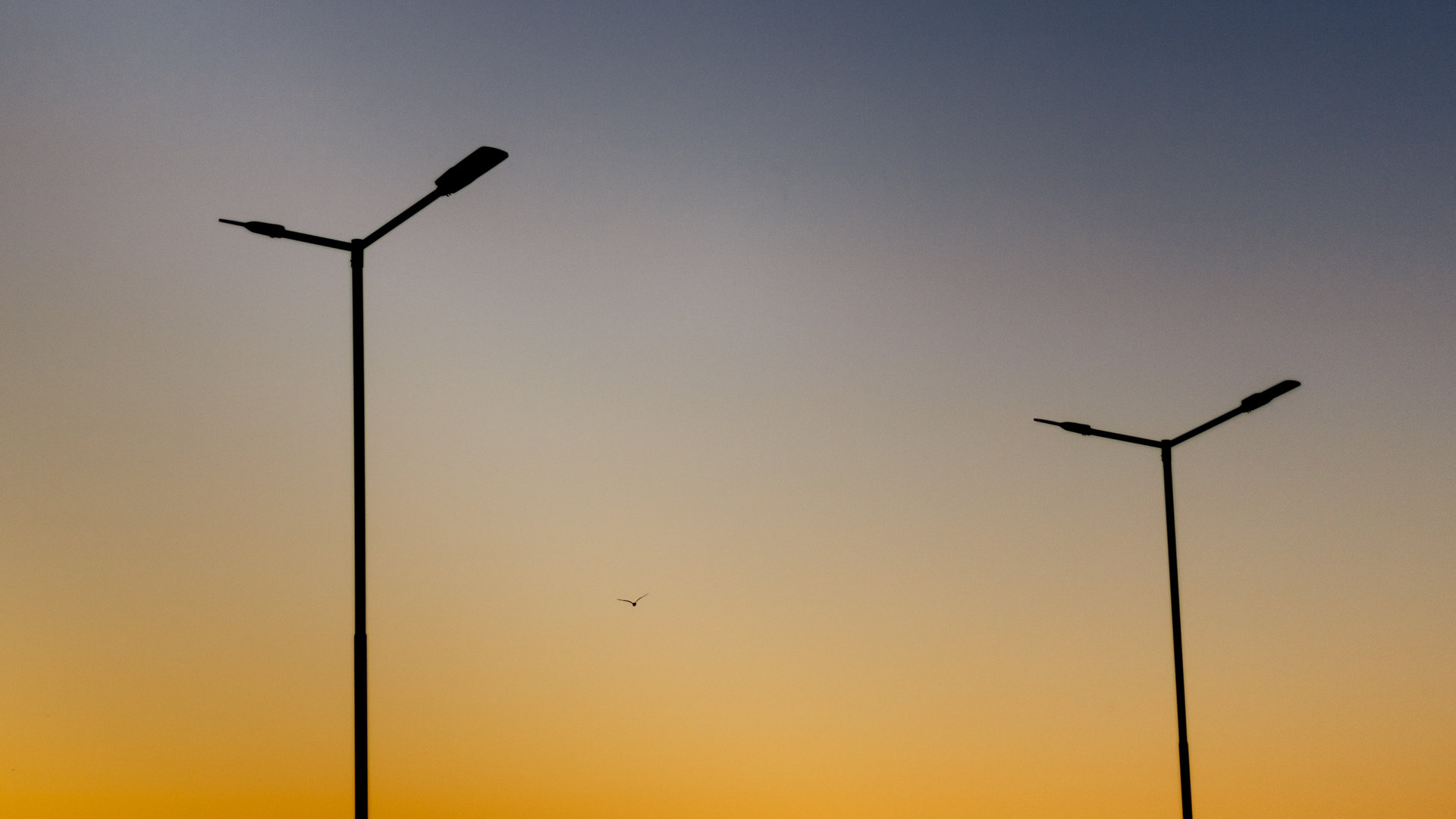 Синхронът на трите птици. | Author Veselin P - youstolemyheart | PHOTO FORUM