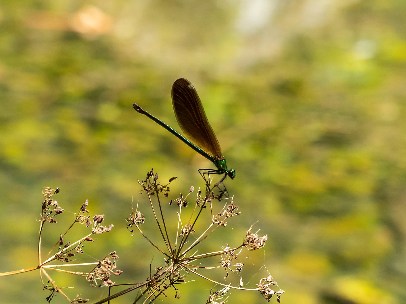 Photo in Wild life | Author petrov_m | PHOTO FORUM