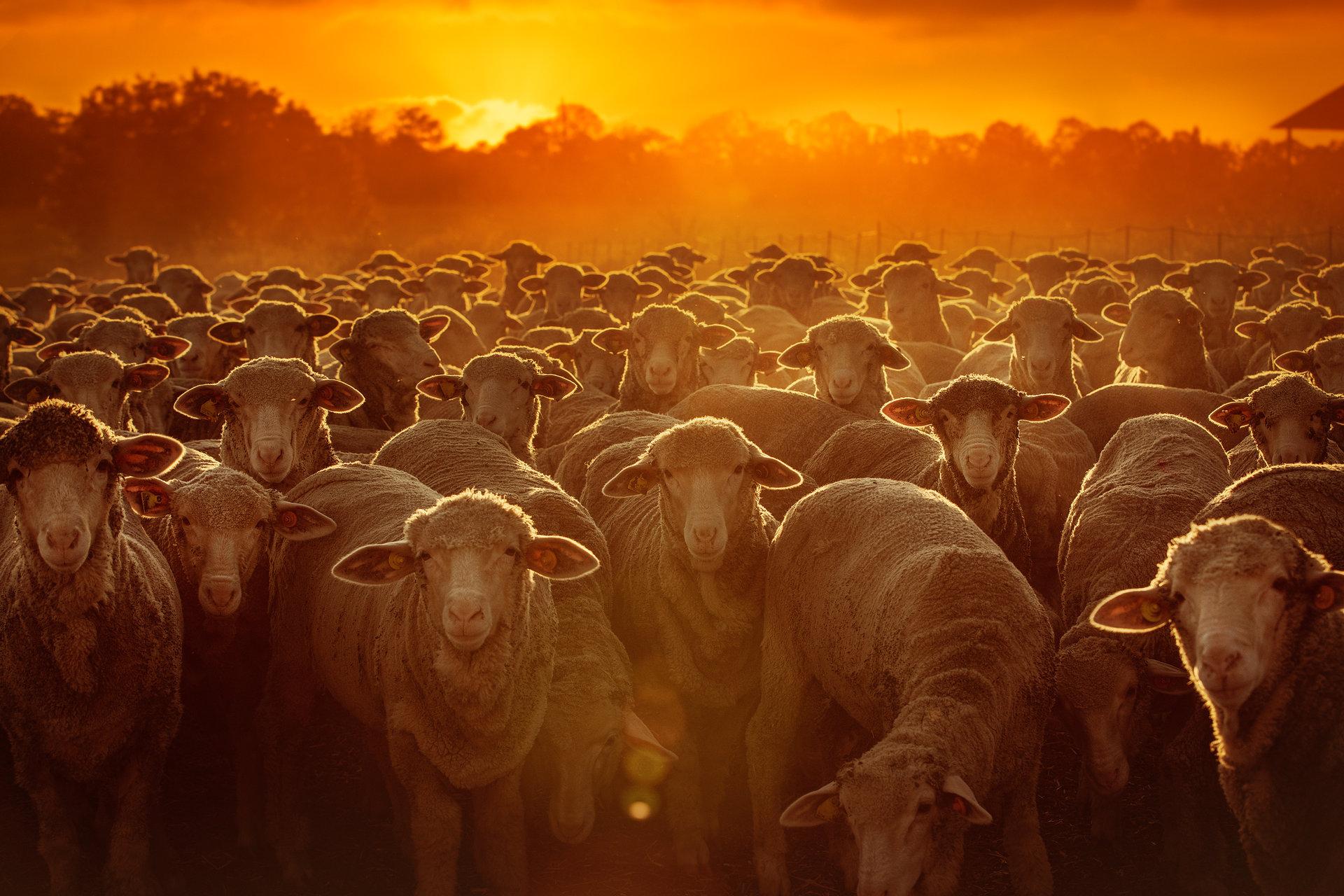 Залез над фермата | Author Vladimir Karamazov - Vlado79 | PHOTO FORUM