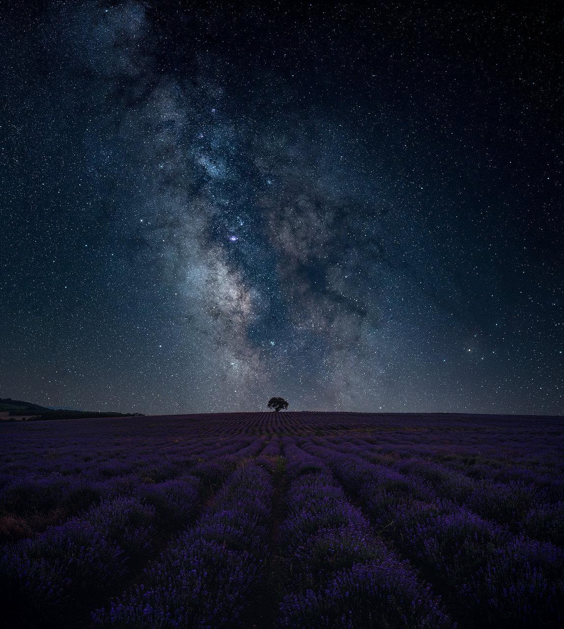 Lavender от Tsvetelin Iliev - C3ck0