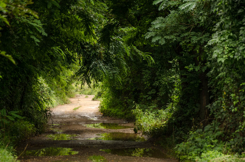 Пътека | Author liko | PHOTO FORUM