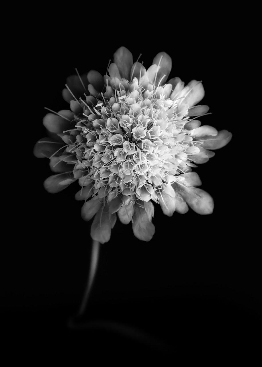 Photo in Everything else | Author Иван Иванов - Jovan | PHOTO FORUM