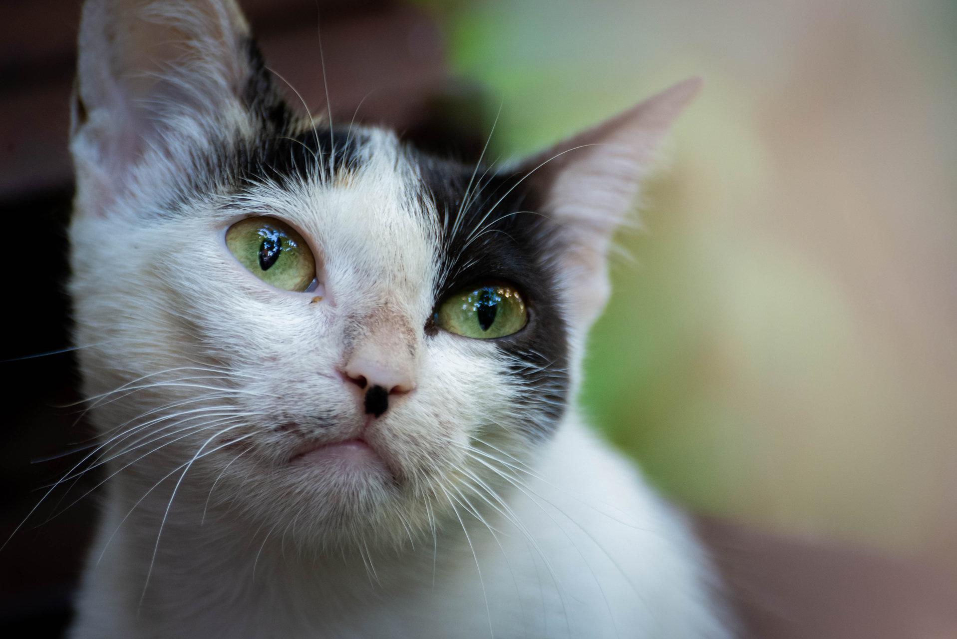 Photo in Pets | Author petrov_m | PHOTO FORUM