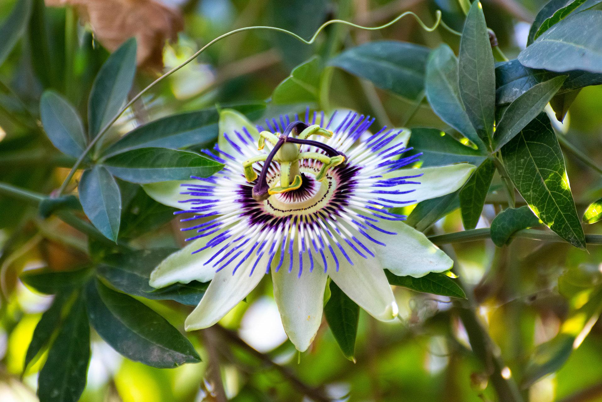Photo in Nature | Author petrov_m | PHOTO FORUM
