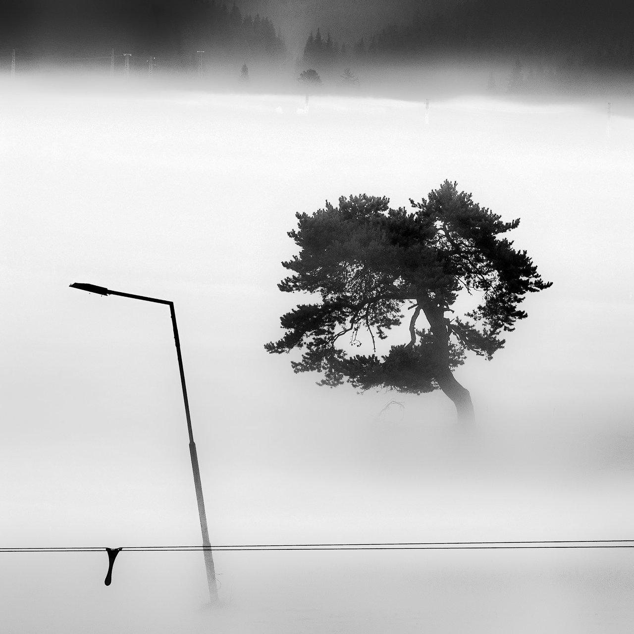 Photo in Everything else | Author kolmik | PHOTO FORUM