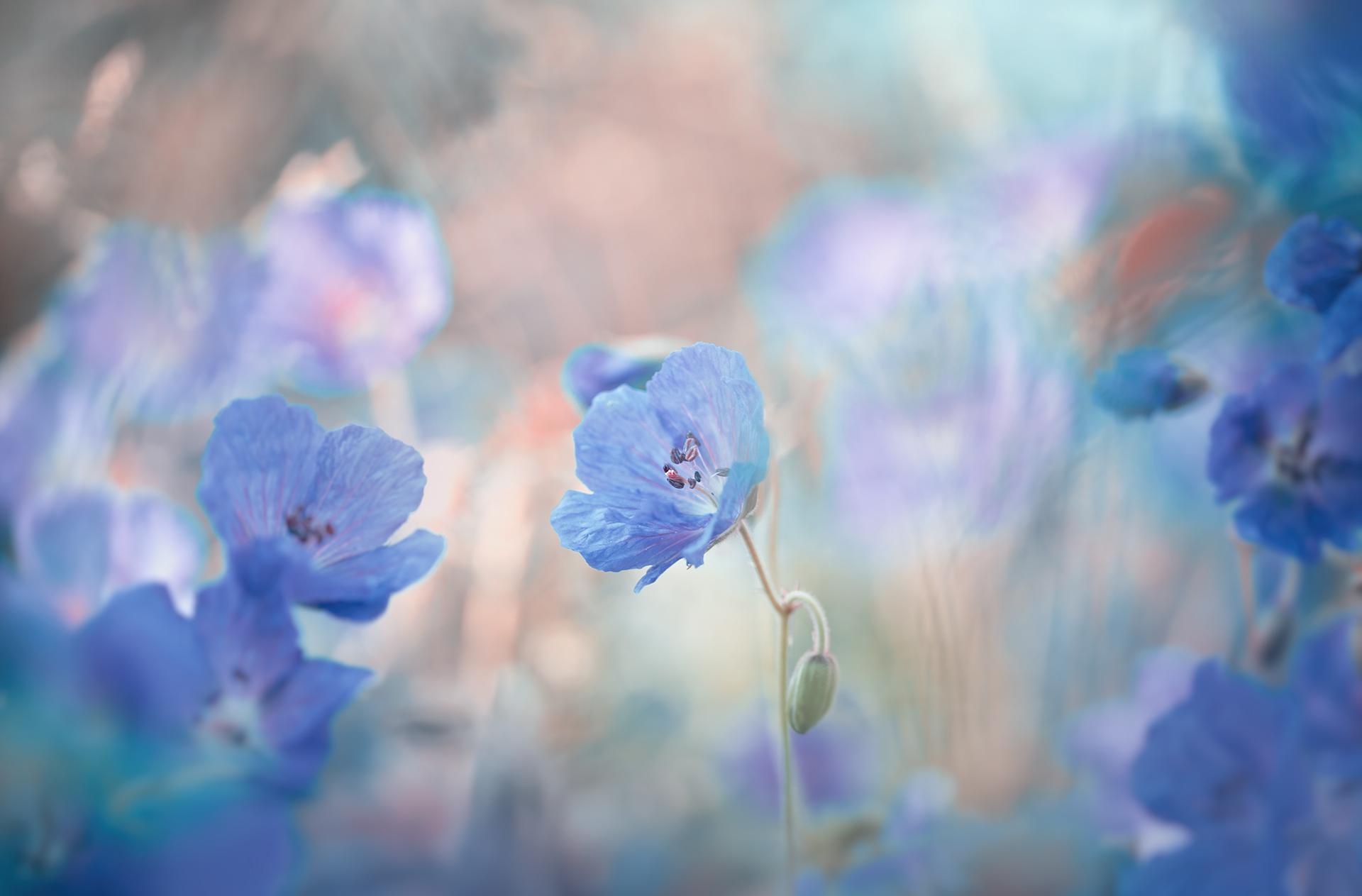 in Blue | Author Nikki Georgieva  V E G A N I K - vega_nik | PHOTO FORUM