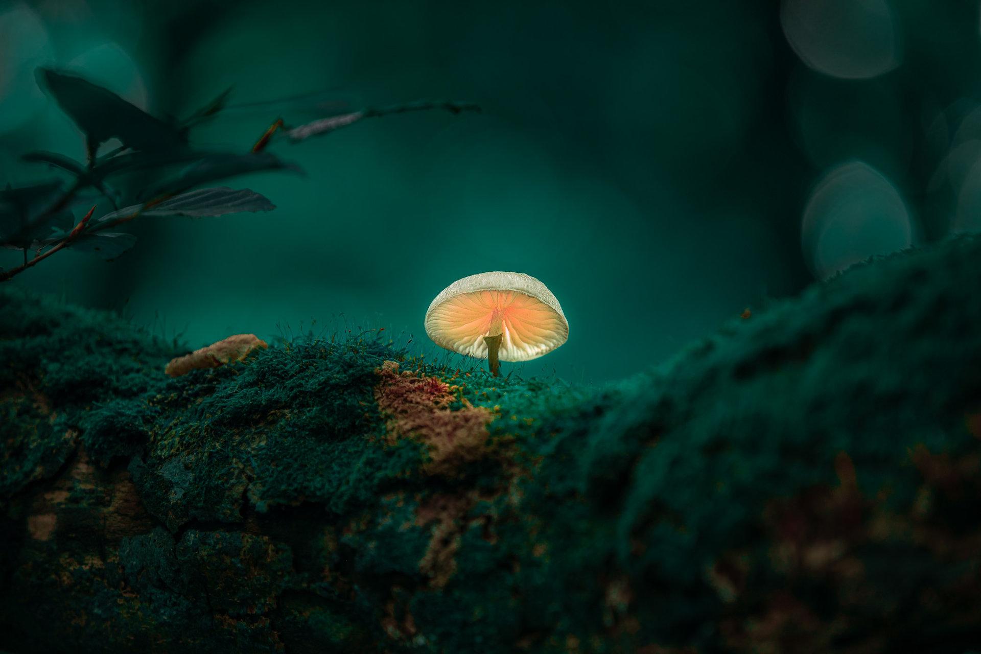 Photo in Nature | Author Ivaylo Petrov - bayivobg70 | PHOTO FORUM