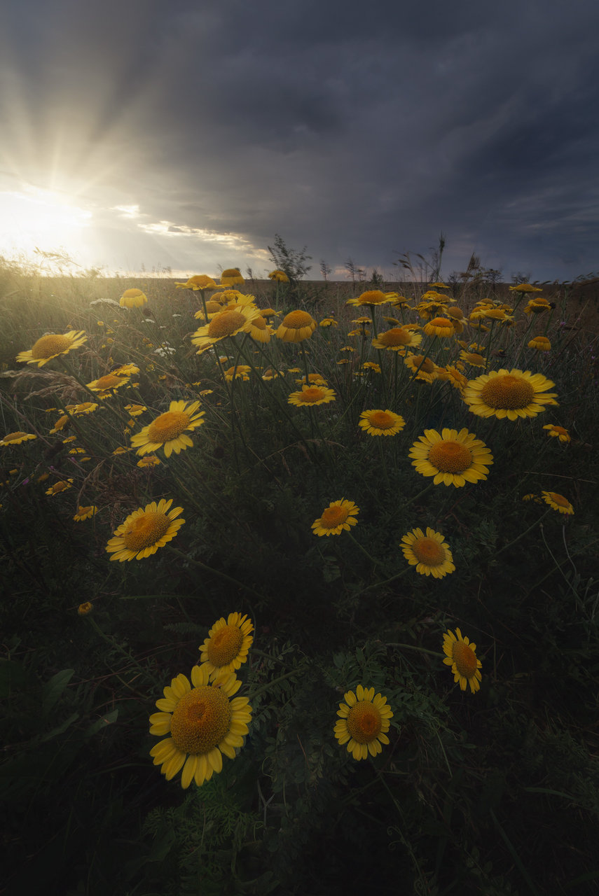 Spring moments | Author ivailo bosev - piff | PHOTO FORUM