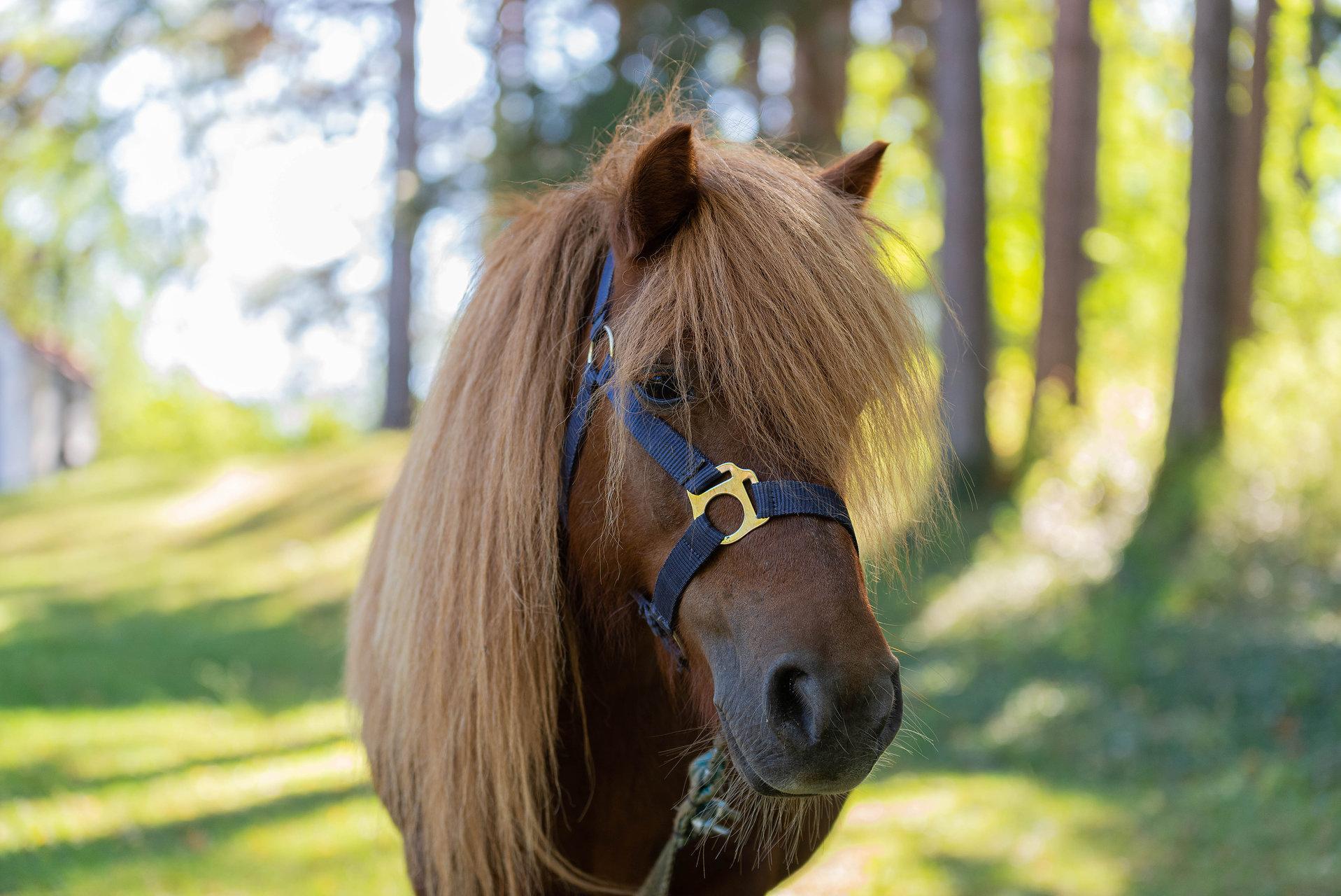 Photo in Wild life | Author Milen Petrov - petrov_m | PHOTO FORUM