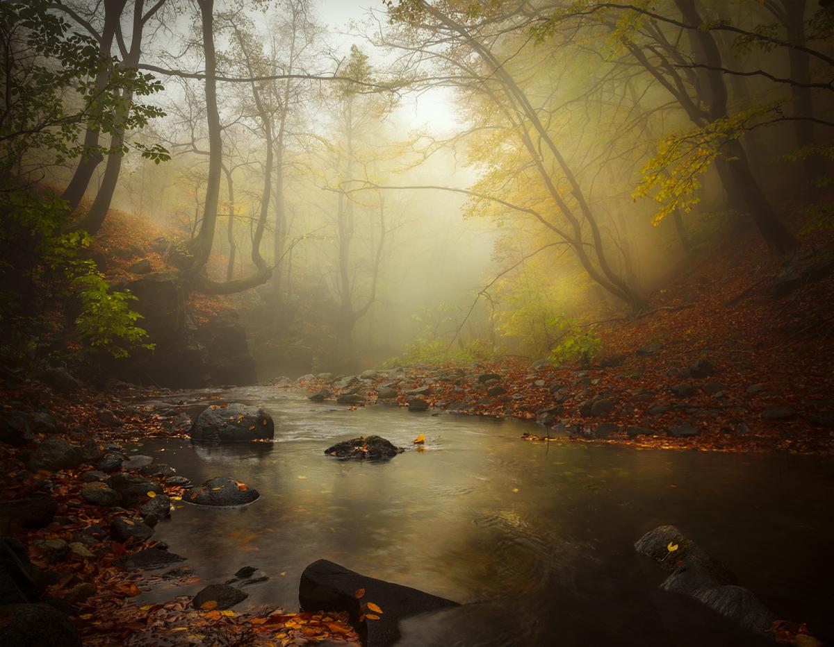 Есенна прелюдия | Author Alexander Alexandrov - sandart | PHOTO FORUM