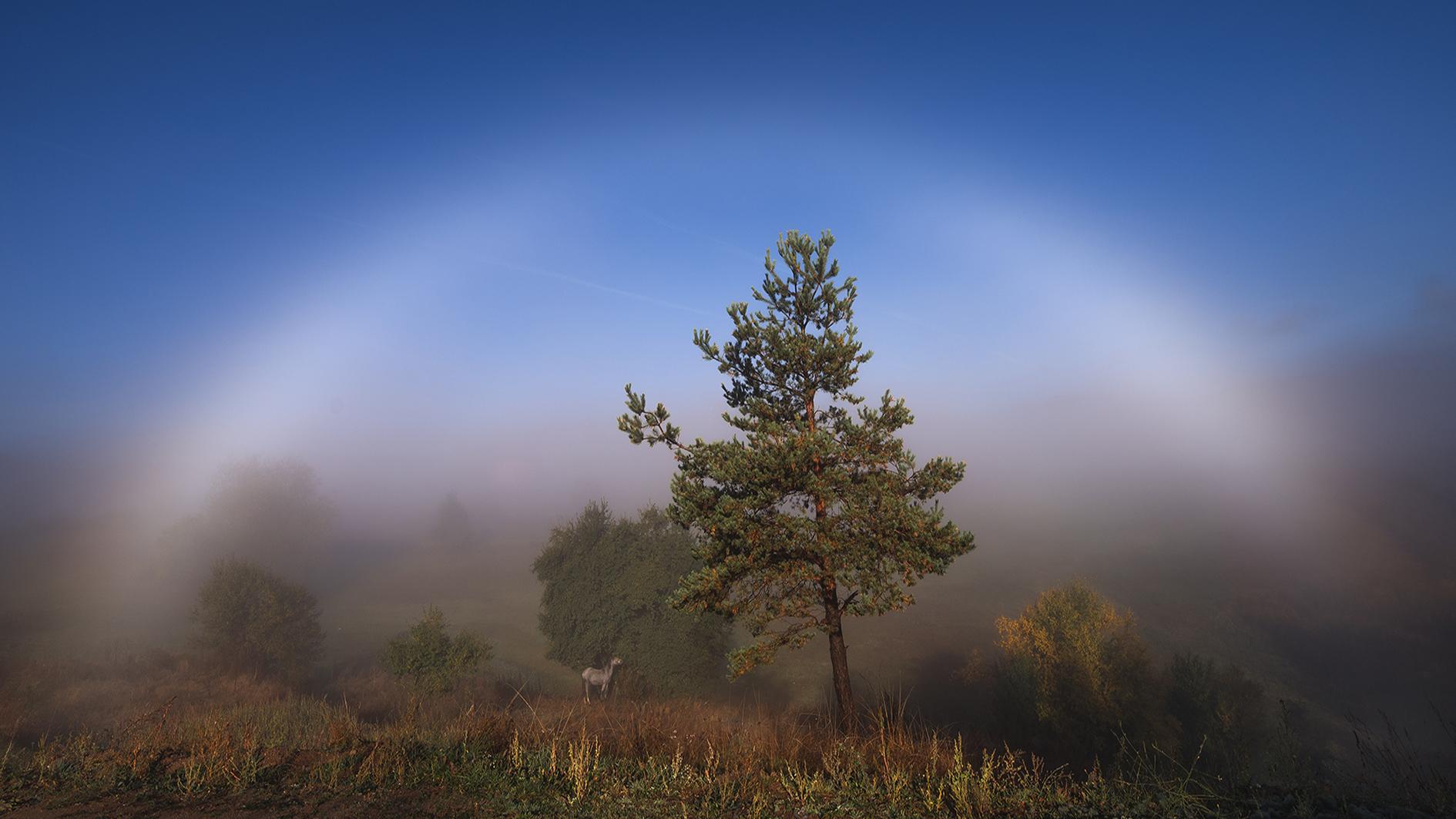 Цветовете на Родопа | Author masteral | PHOTO FORUM
