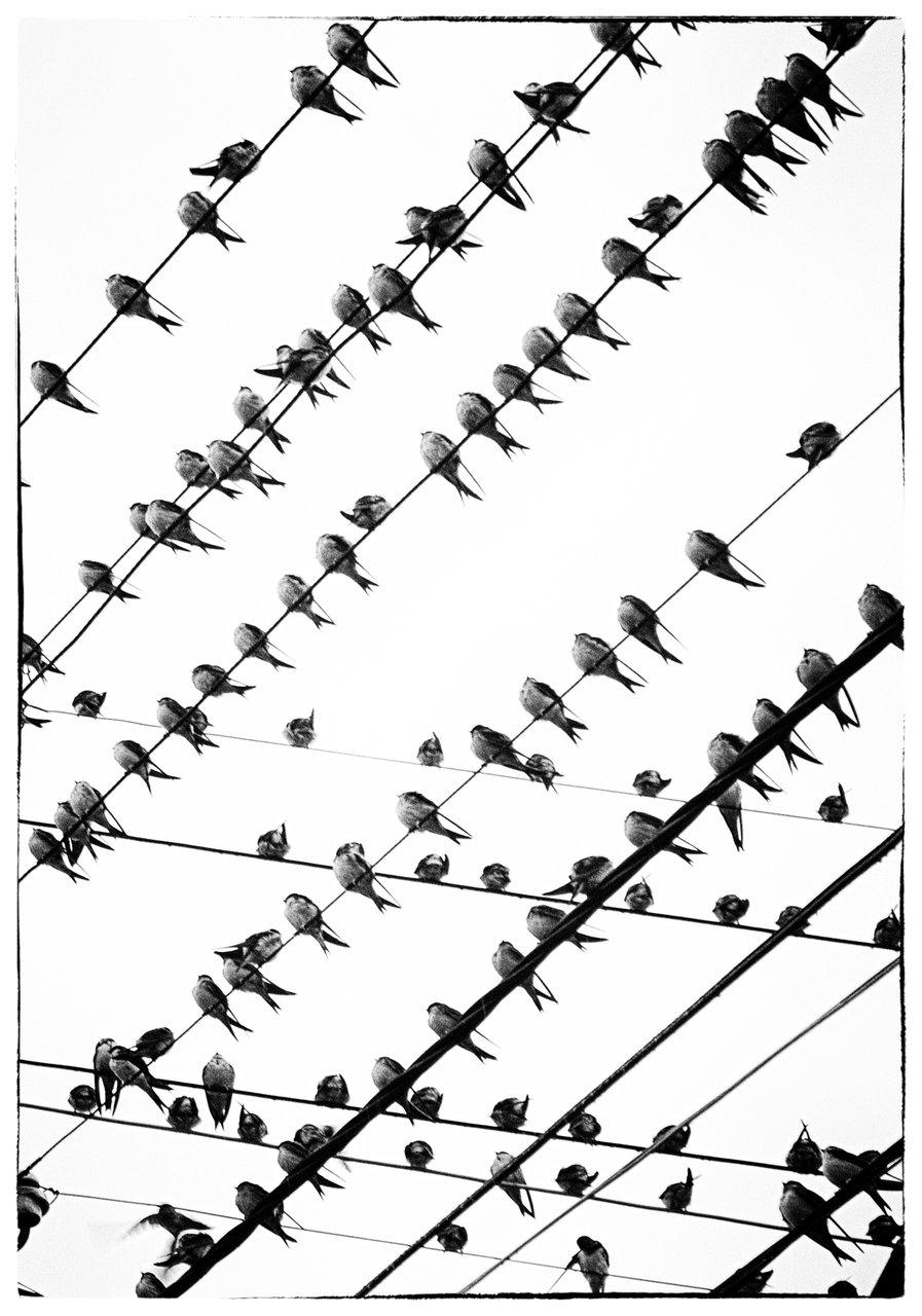 Пресечени линии | Author mitpis | PHOTO FORUM