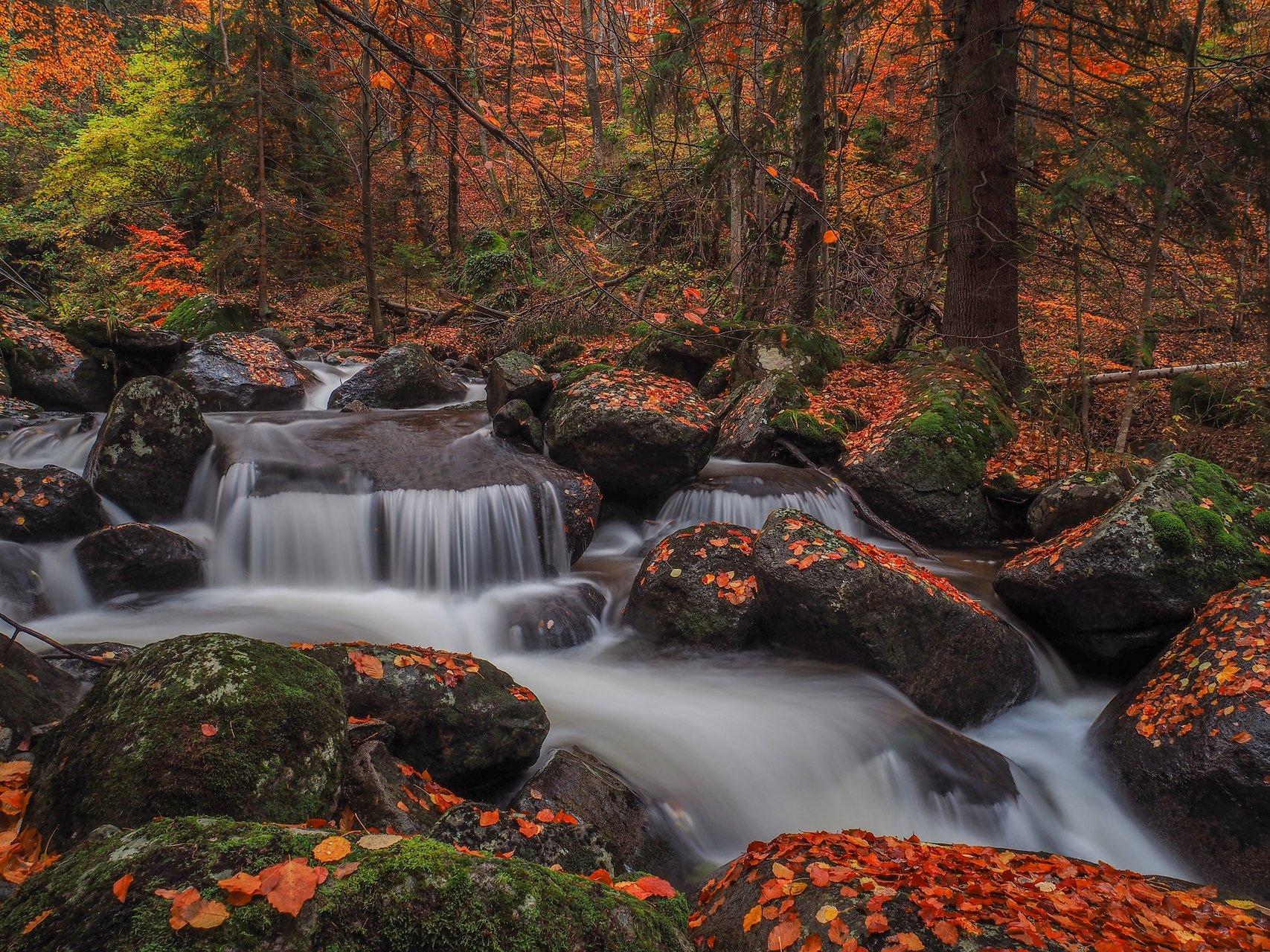 Още от Есента | Author Емил Младенов - carps | PHOTO FORUM