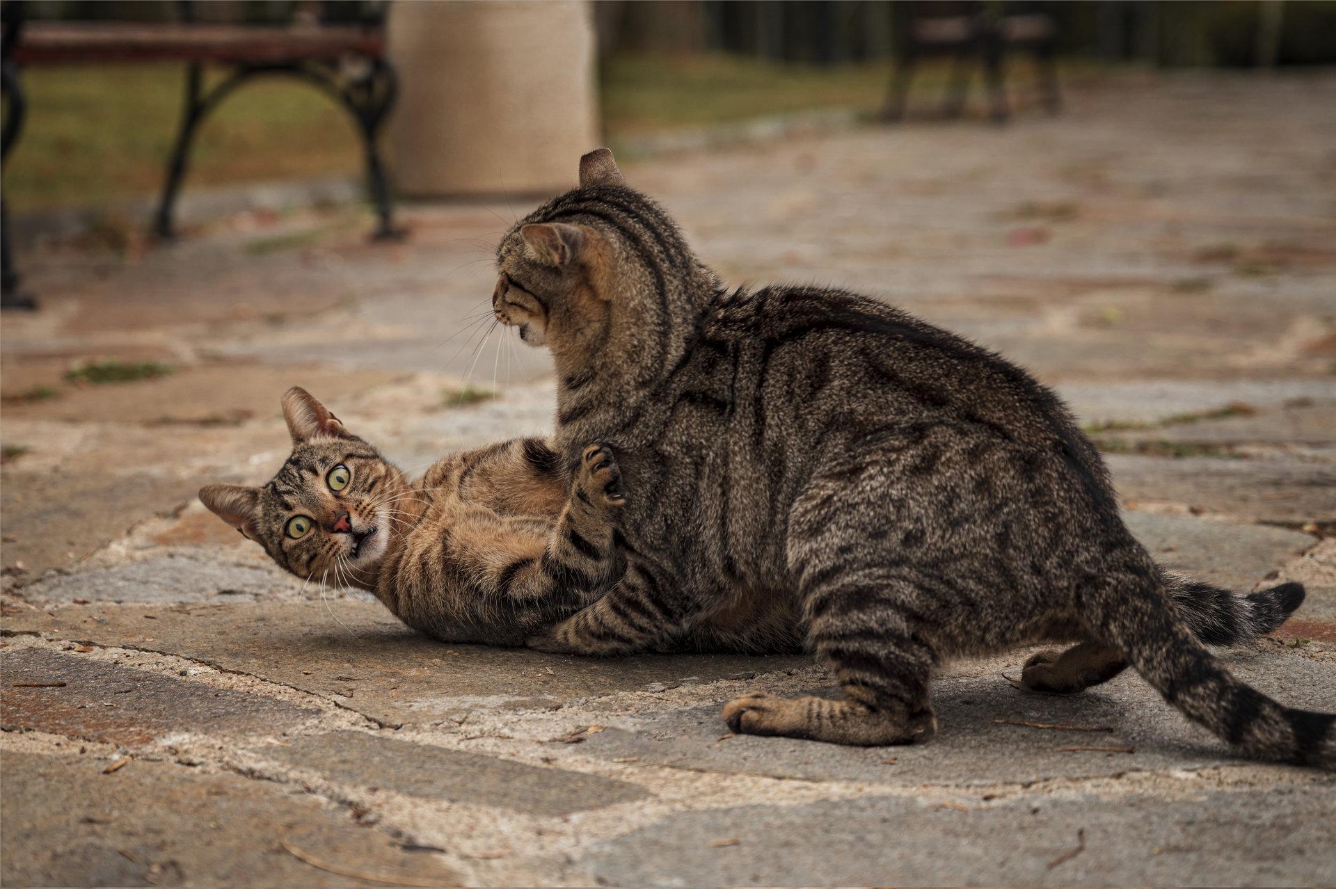 Cat me if you can!   Author rositsa_dimitrova   PHOTO FORUM