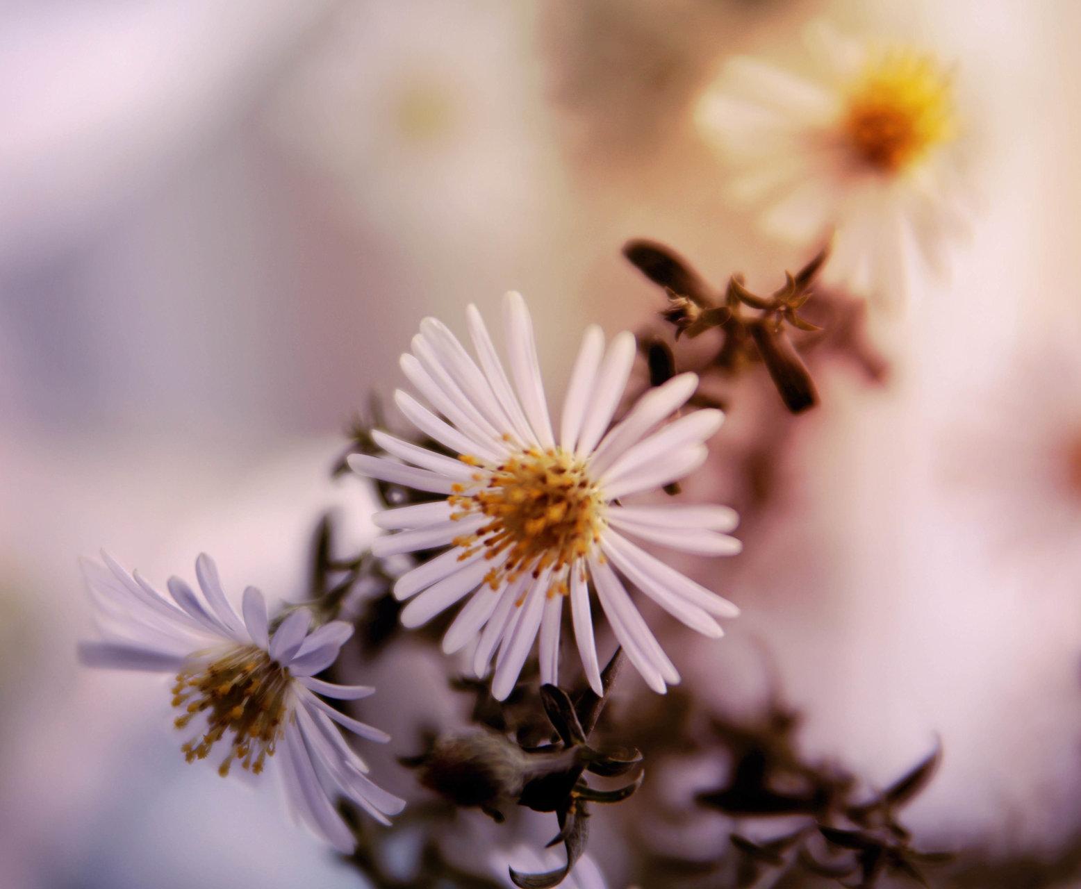 есенни цветя | Author elitzapetkova | PHOTO FORUM