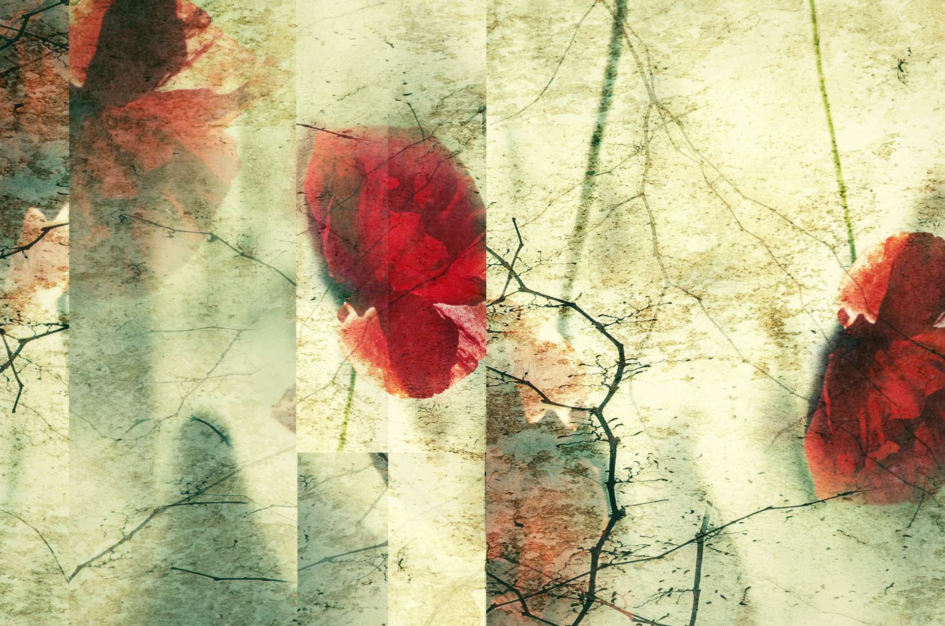 Photo in Abstract | Author desiignat | PHOTO FORUM