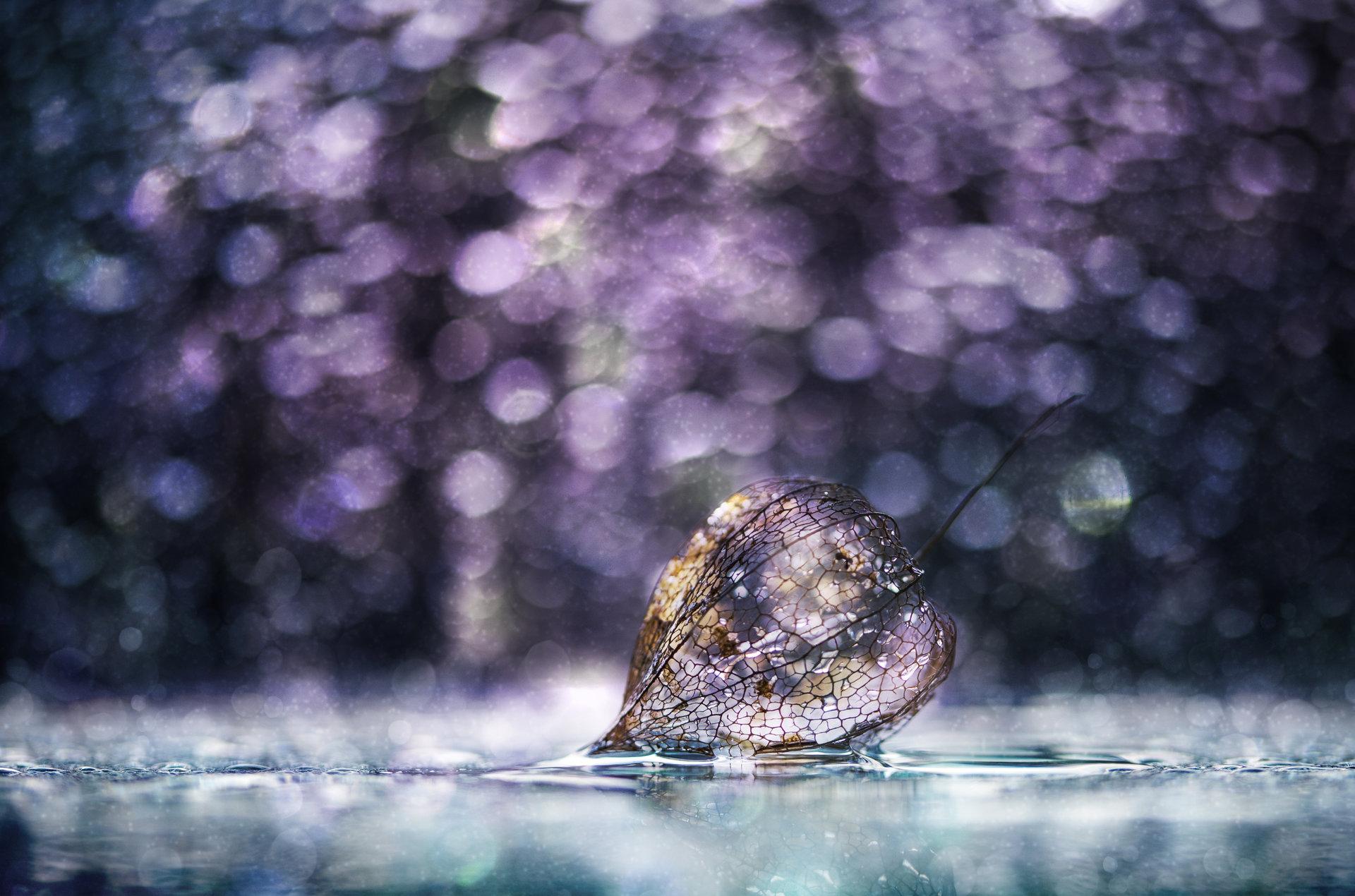 ...with a magic light... | Author vega_nik | PHOTO FORUM