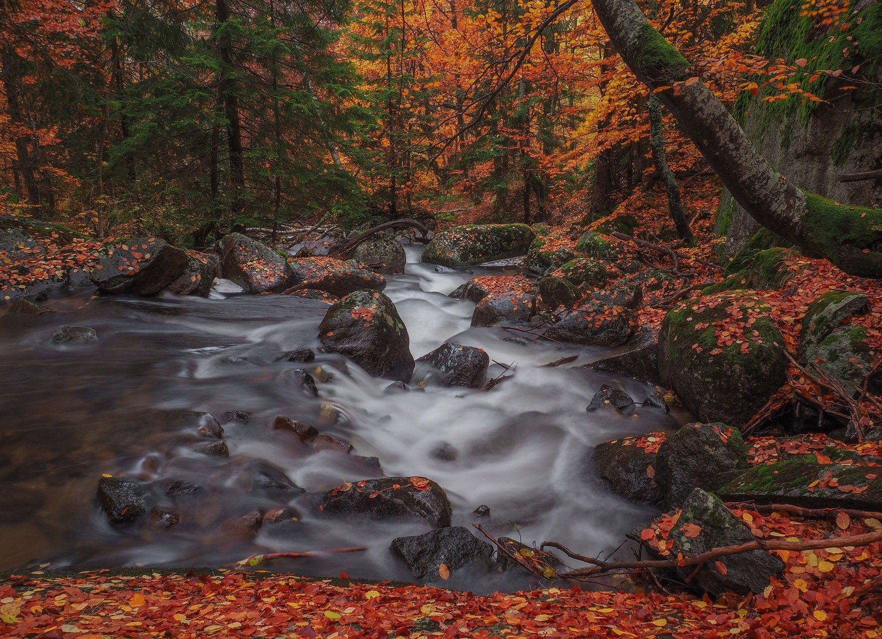 Есен по Владайската | Author Емил Младенов - carps | PHOTO FORUM