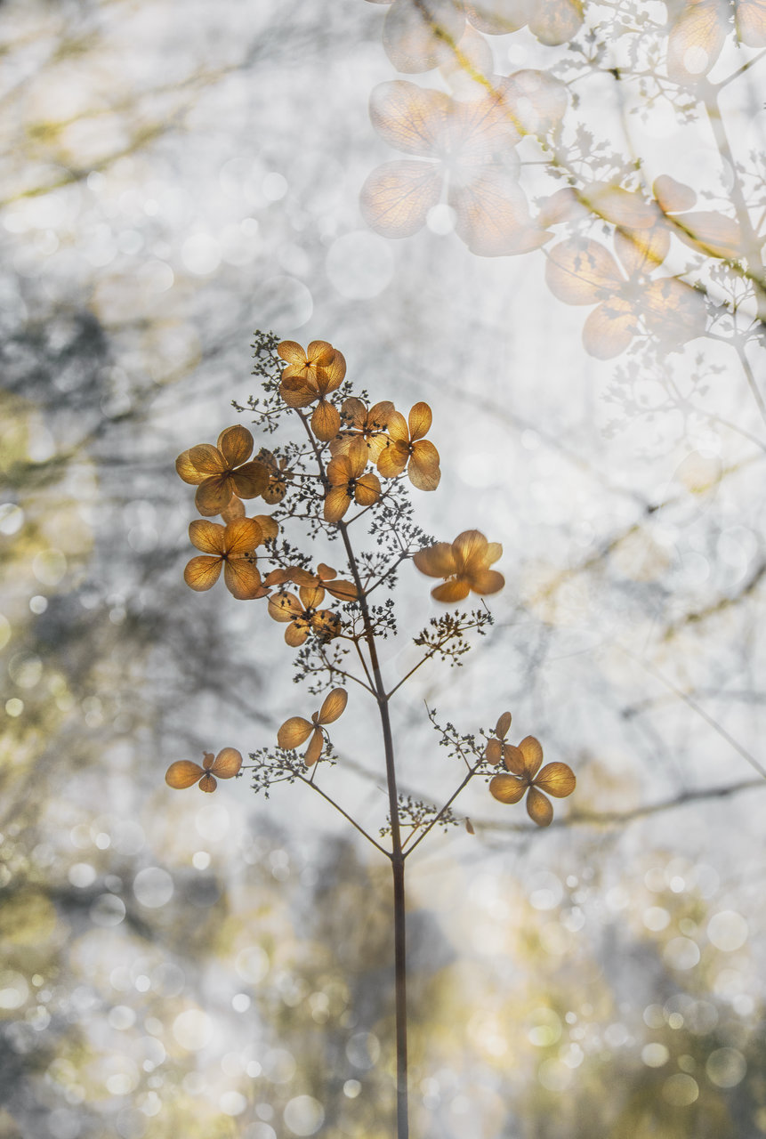 ... | Author vega_nik | PHOTO FORUM