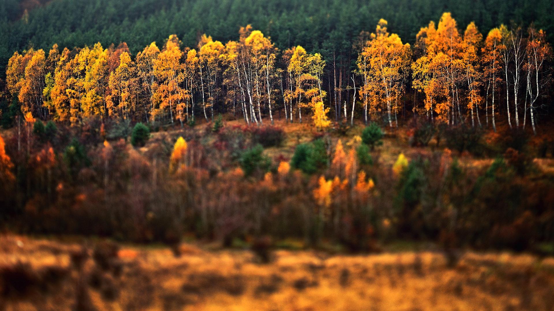 Златна есен..... | Author Yonko_Rusev | PHOTO FORUM