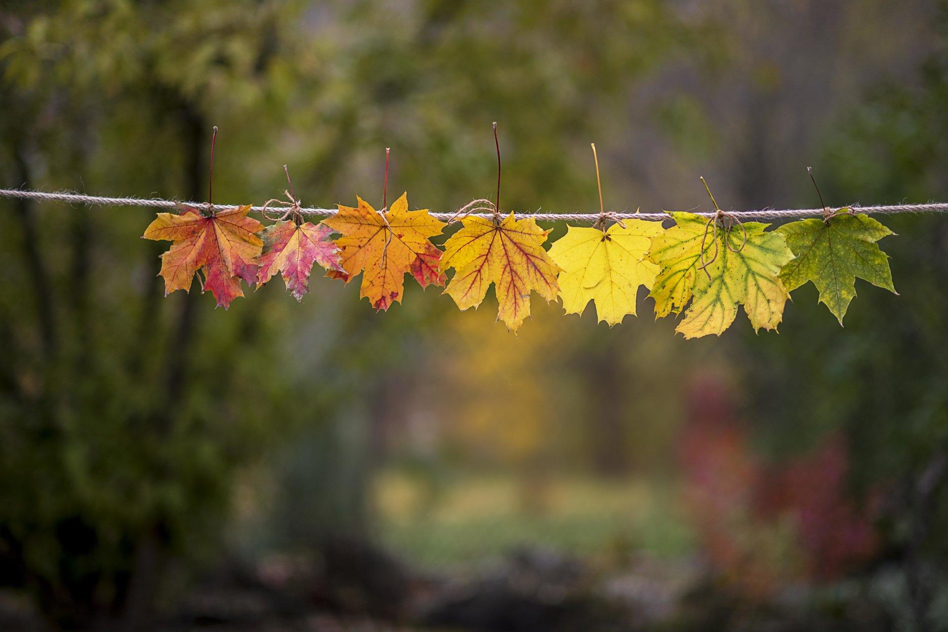 Есенни листа(цветя). | Author Кунчо | PHOTO FORUM