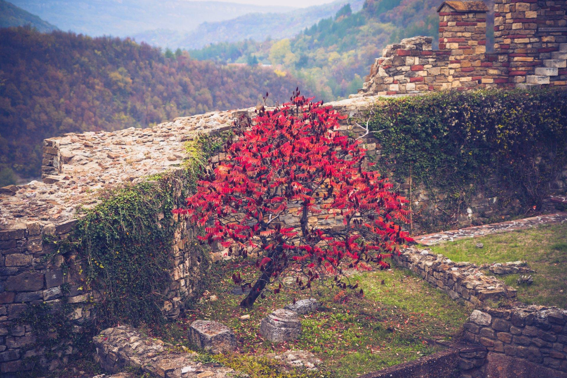 Photo in Nature | Author Slacam | PHOTO FORUM