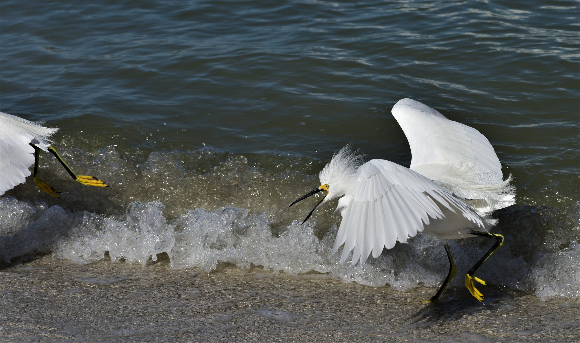 chasing others | Author mirs | PHOTO FORUM