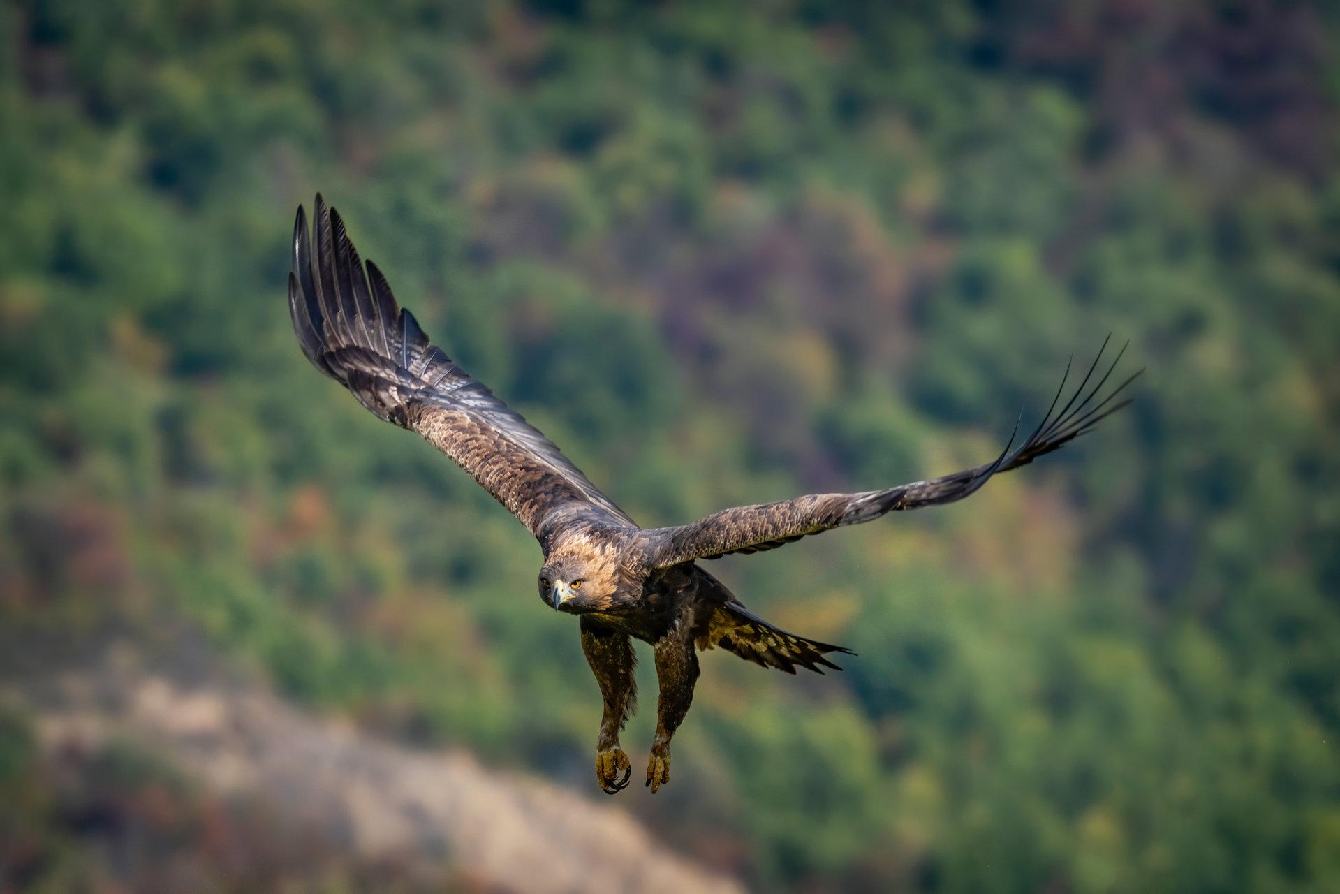 Полет... | Author edobg | PHOTO FORUM
