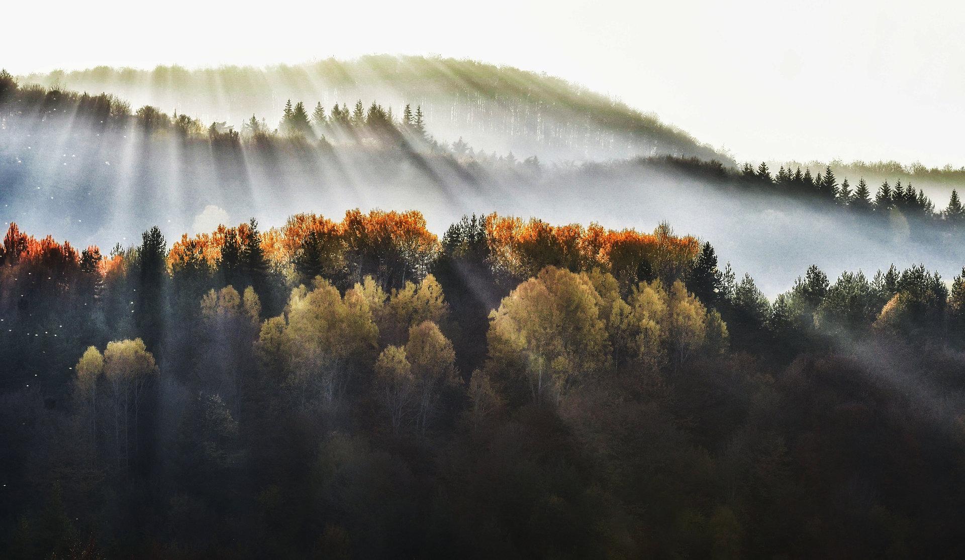 Photo in Nature | Author kolmik | PHOTO FORUM
