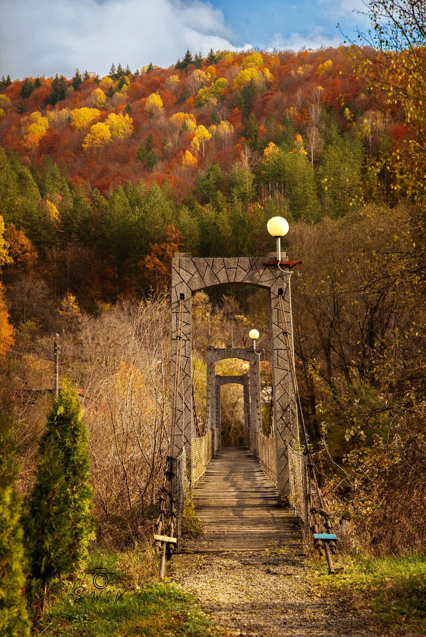 Gold Autumn | Author SWIX | PHOTO FORUM