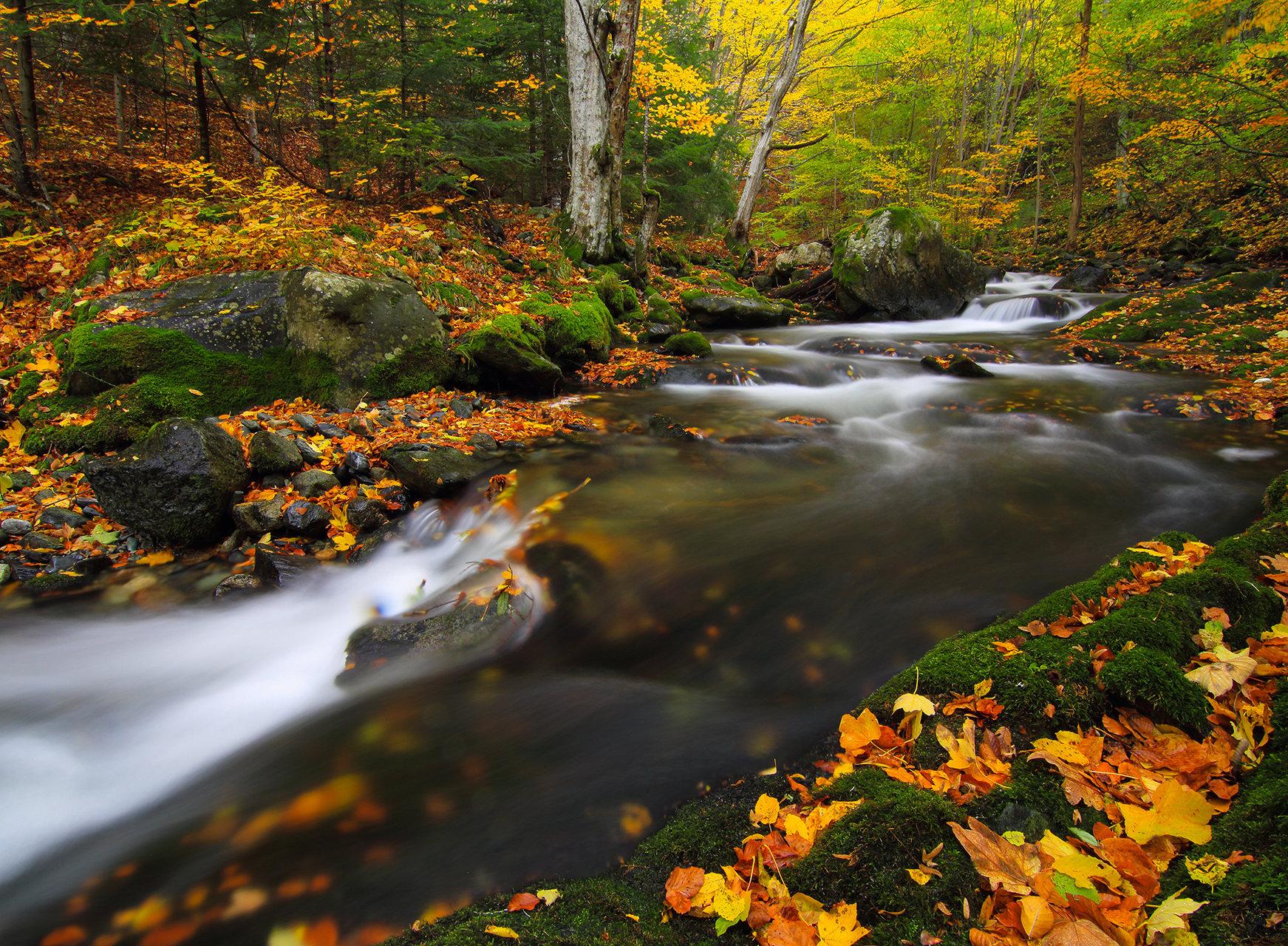 ,,Есента рисува'' от Emiliyan  Evdokimov - evdokimov_emo