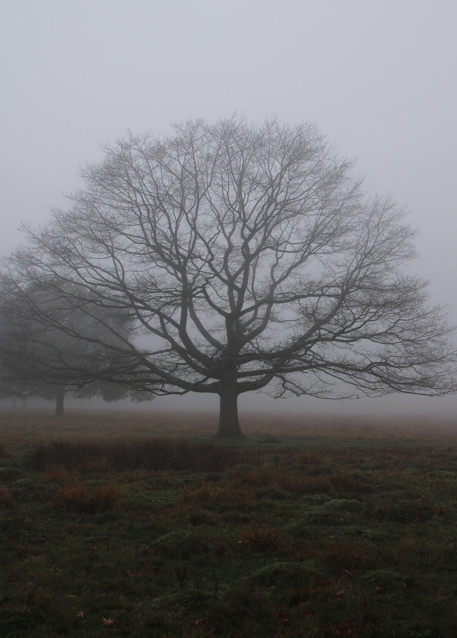 Photo in Nature | Author marsci | PHOTO FORUM
