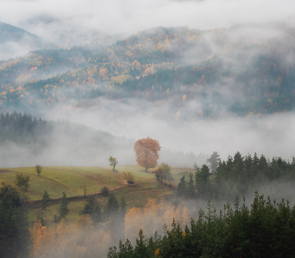 Есен | Author Flavia85 | PHOTO FORUM