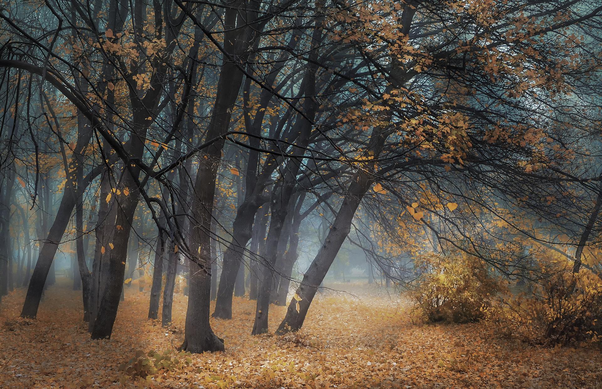 Photo in Landscape | Author mitakadobrev17 | PHOTO FORUM