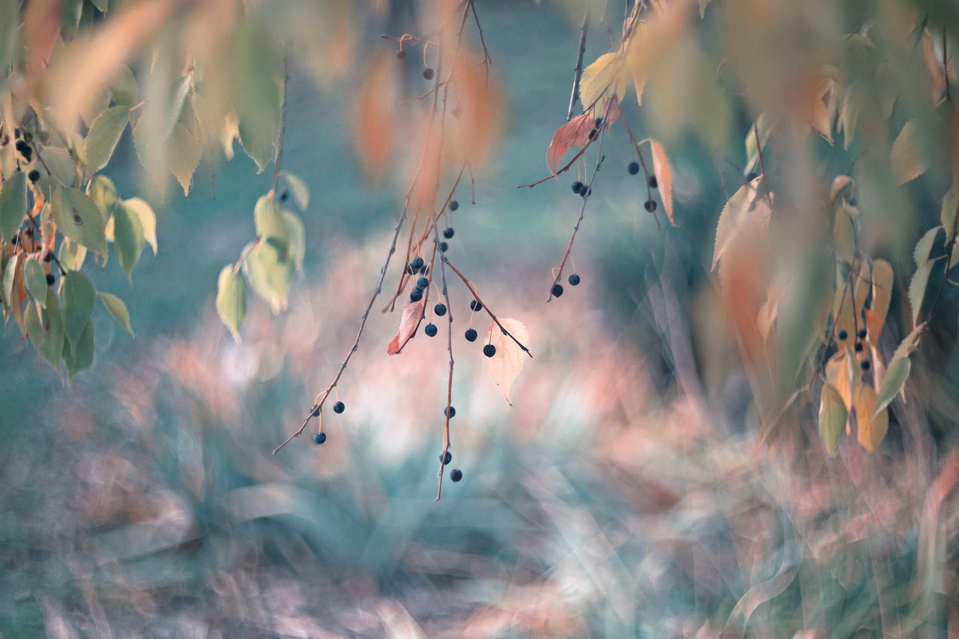 Photo in Nature | Author Nayden Bochev - NAKATA211 | PHOTO FORUM