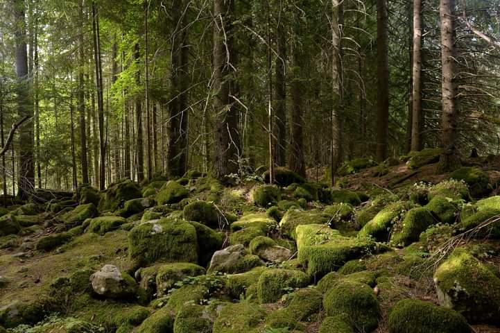 Пияната гора, Чаирите | Author Anelia Nacheva - Abril | PHOTO FORUM