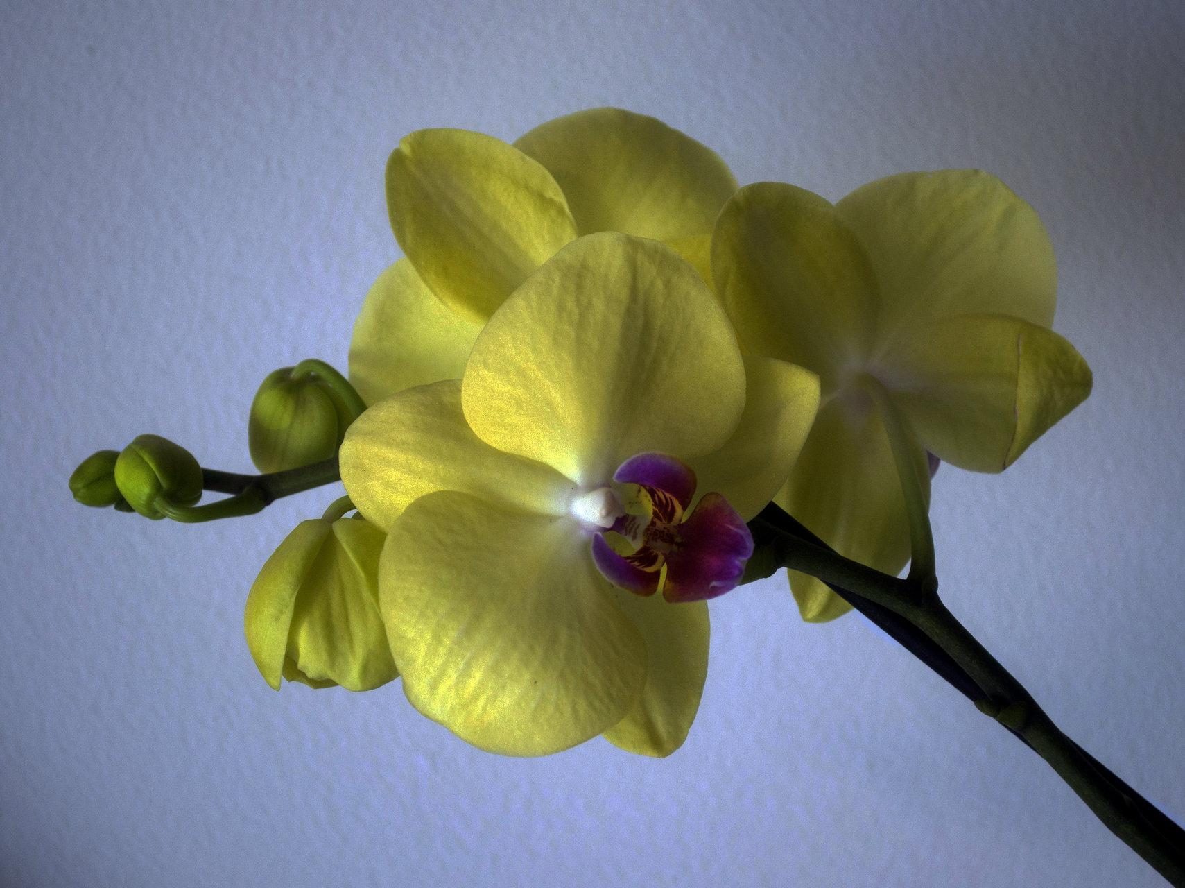 природа | Author [3-days annonimity] | PHOTO FORUM