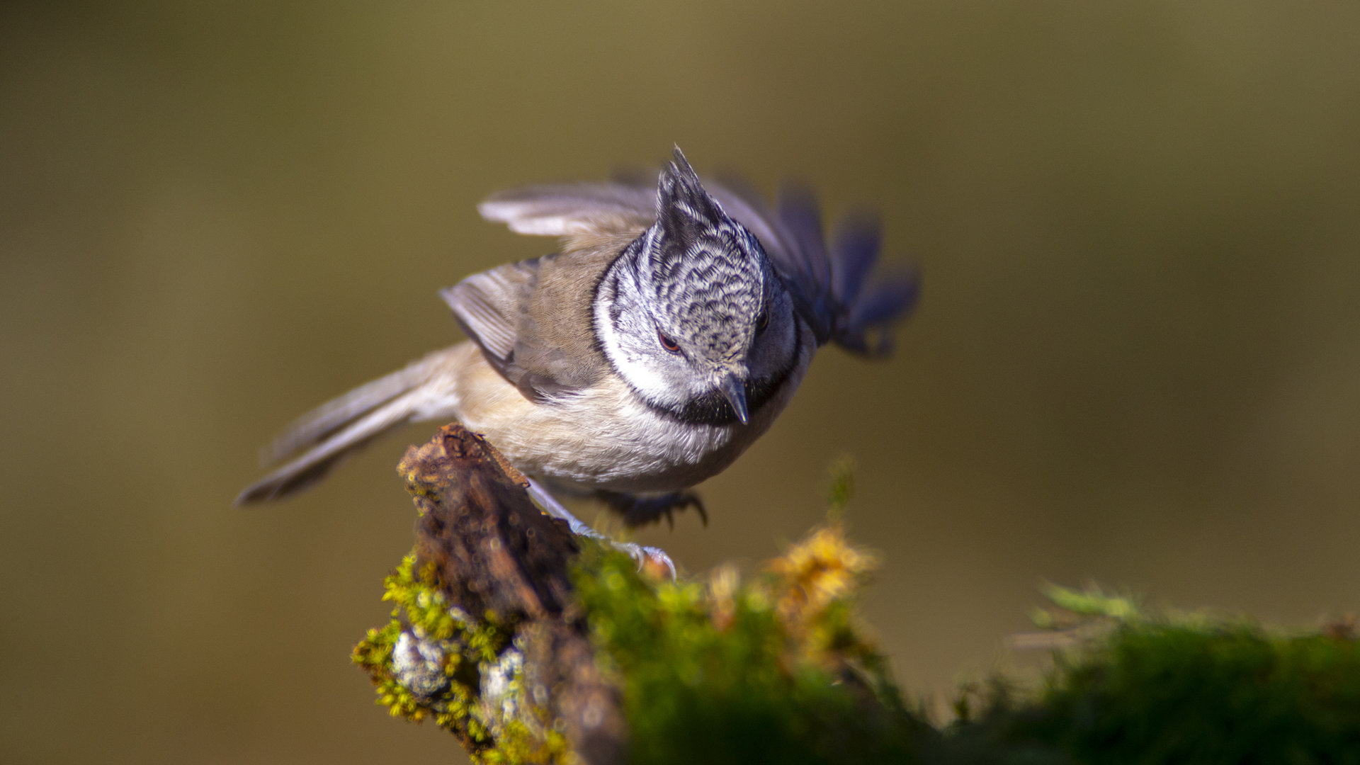 Photo in Wild life | Author LorDDemoniC | PHOTO FORUM