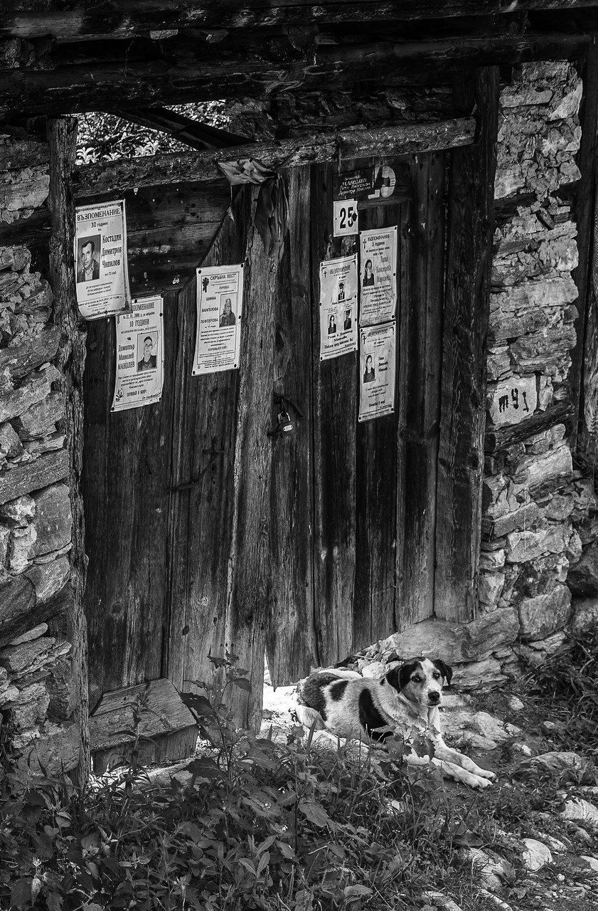 Последния обитател на дома -с.Долен   Author TISEOS   PHOTO FORUM