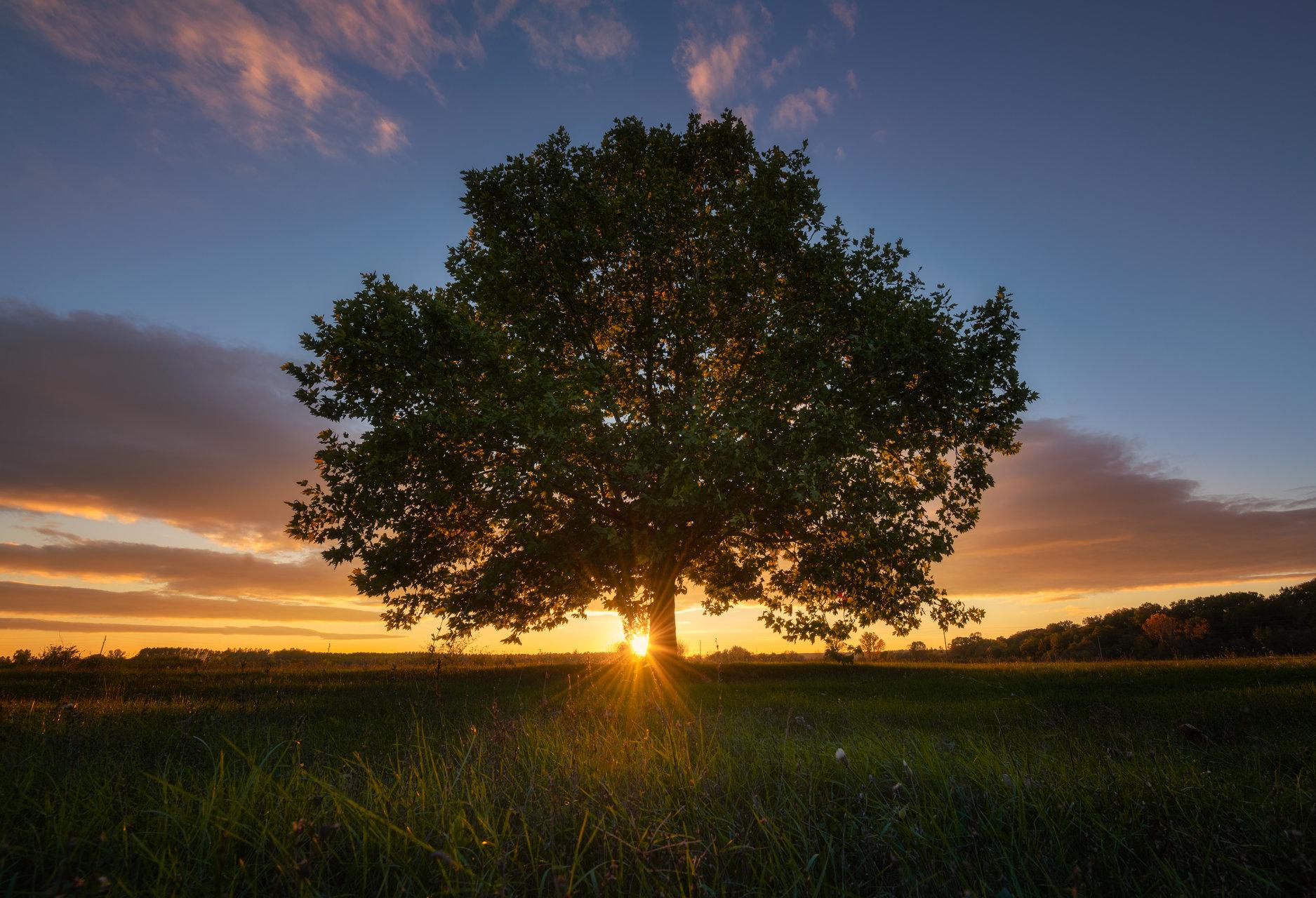 Photo in Nature | Author Boyko Valchev - boiko90 | PHOTO FORUM