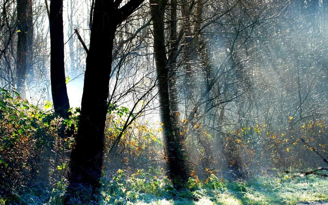 Photo in Nature | Author Govinda | PHOTO FORUM