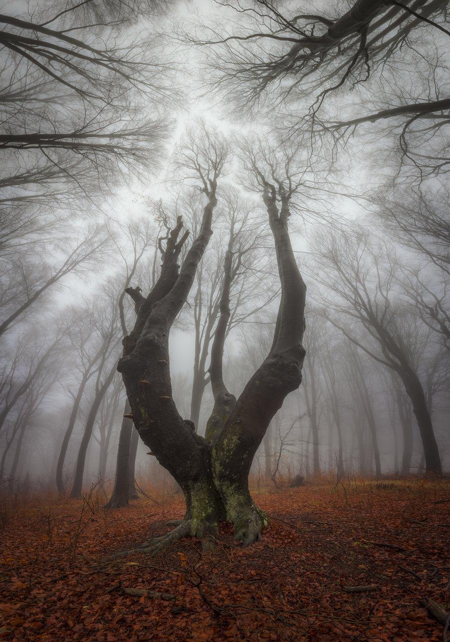 Гората и Мъглата | Author tattoo_alien | PHOTO FORUM